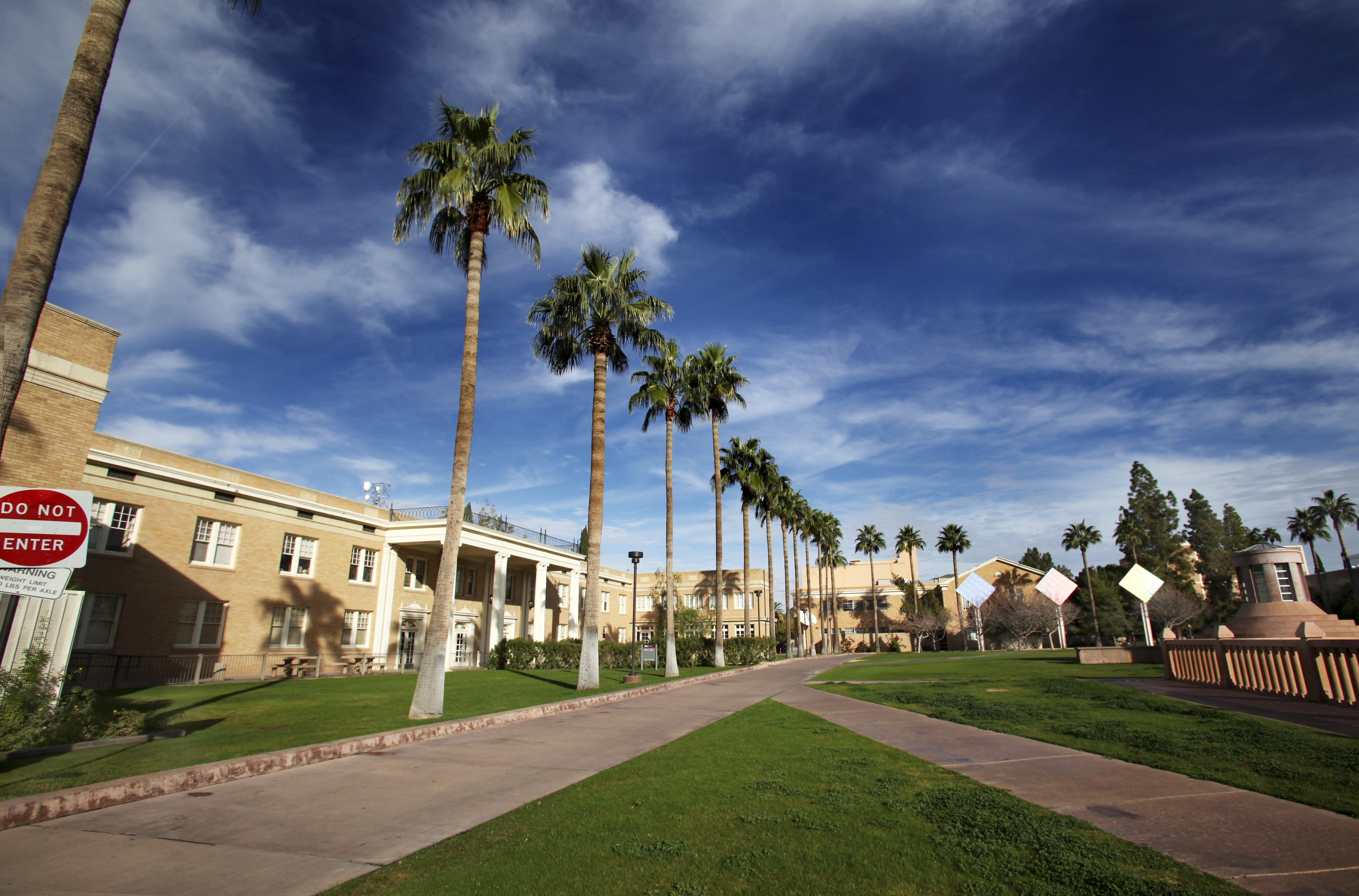 5 Tips For Caring For Palm Trees In Arizona