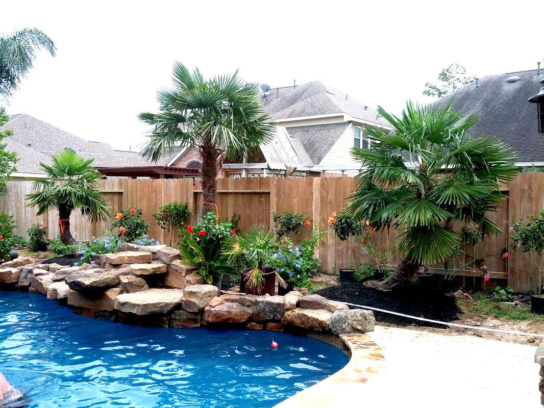 Medium Sized Palm Trees For Your Pool