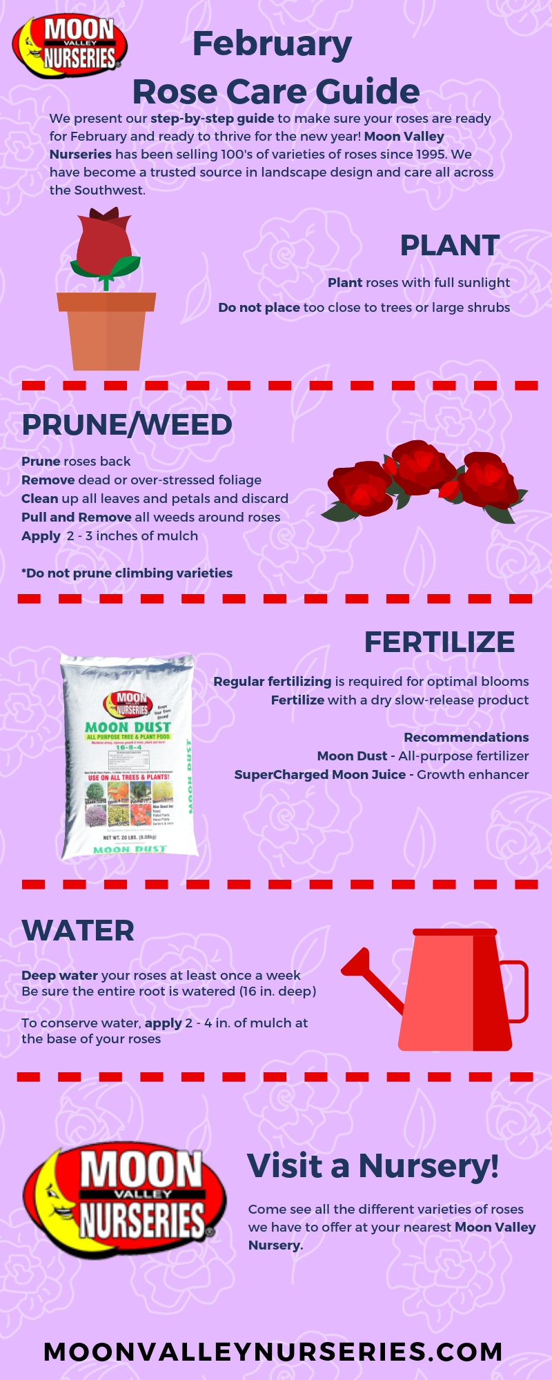 February Rose Care Guide