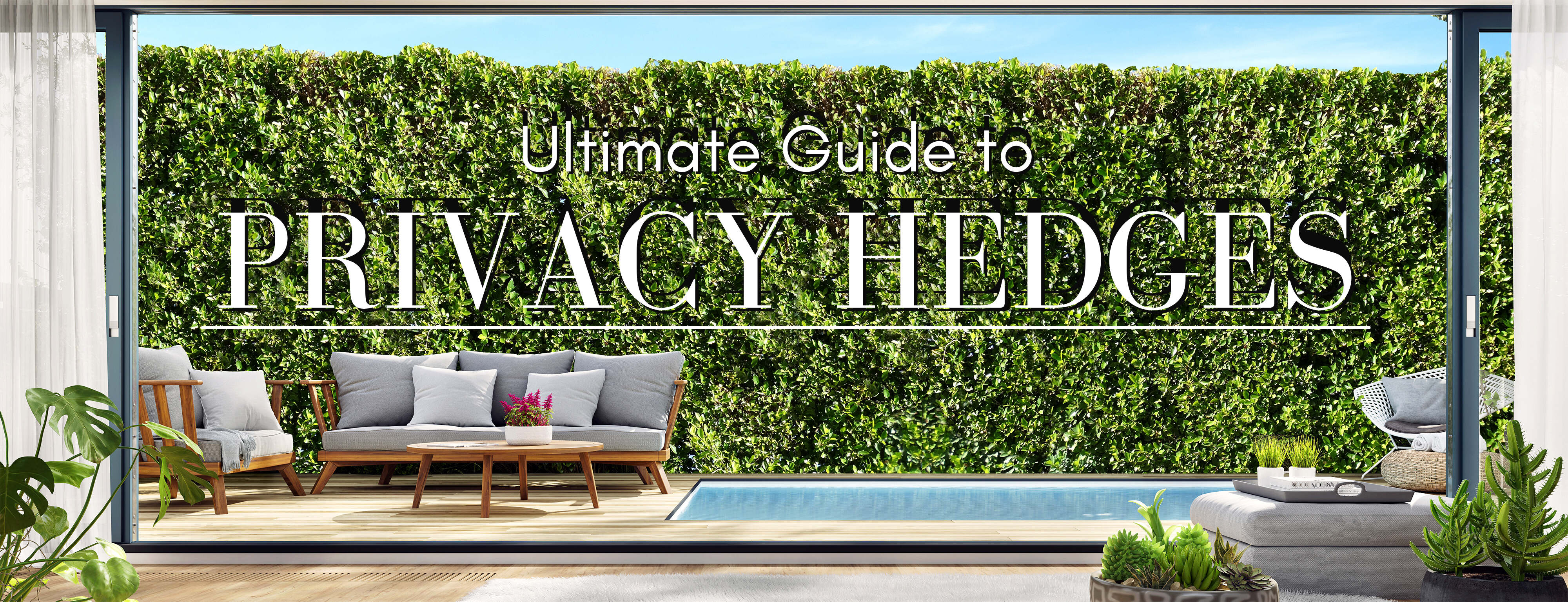 The Ultimate Guide to Privacy Hedges
