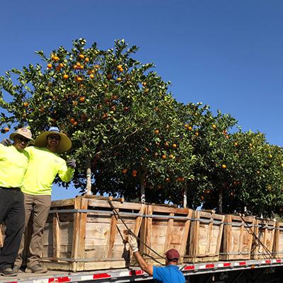 citrus on truck