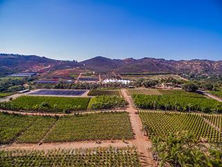 Moon Valley Nurseries Farms Growing Custom Trees For 25 Years