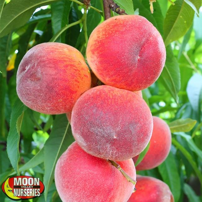 peaches_1